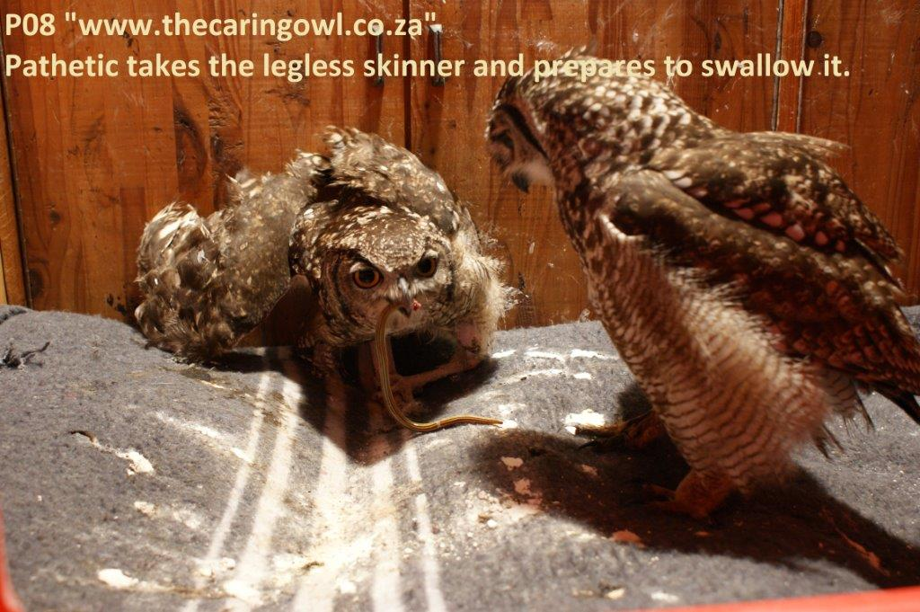 http://www.thecaringowl.co.za/images/P08-DSC08931.jpg?547